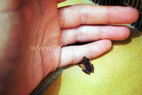 Una rana mignon viene a darmi la buonanotte